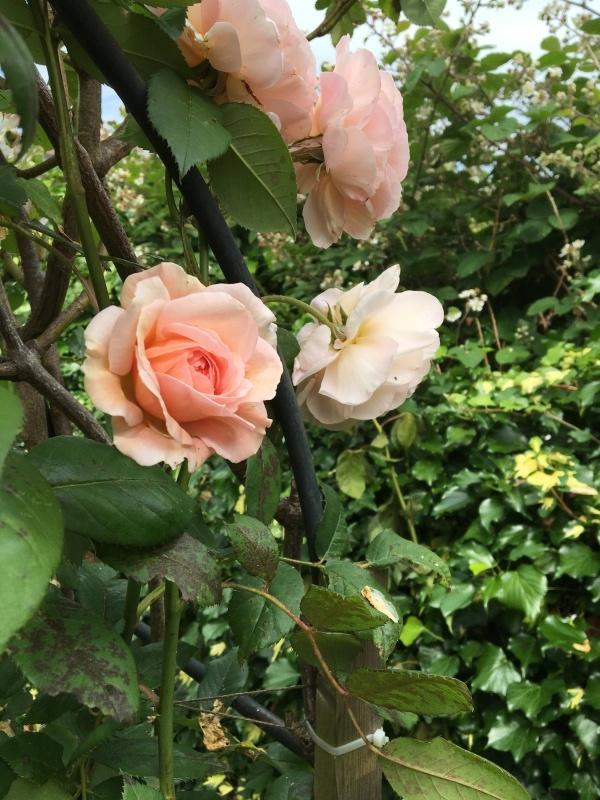 暮らすように旅する〜イギリスのおうちの秘密のお庭 1_c0274374_23170152.jpeg