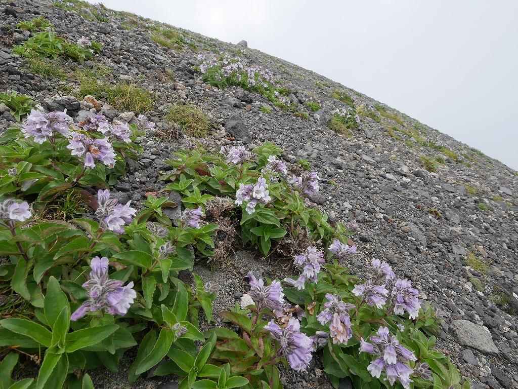 樽前山、7月21日_f0138096_14174226.jpg