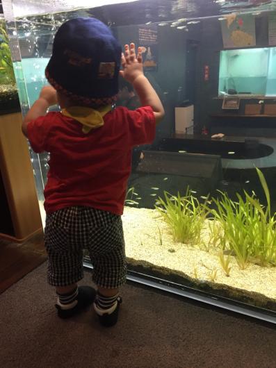 忍野森の中の水族館。_b0135325_20542602.jpg