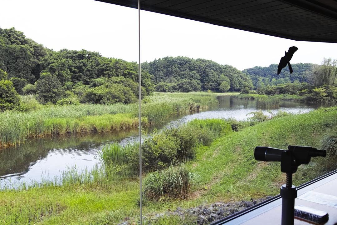 sd Quattro で野鳥撮影は楽しめないのか?いえいえ。~松戸市・21世紀の森公園でカワセミを楽しむ(後編)~_c0223825_12564085.jpg