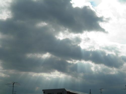 レンブラント光線と夏の雲とノラさんたち_c0338136_22562563.jpg
