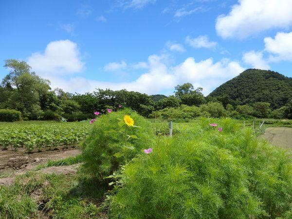 土手に咲くネジバナ~梅雨の晴れ間に彩りを探して~_b0206037_09202396.jpg