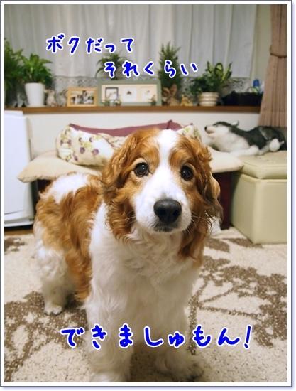 d0013149_00290736.jpg