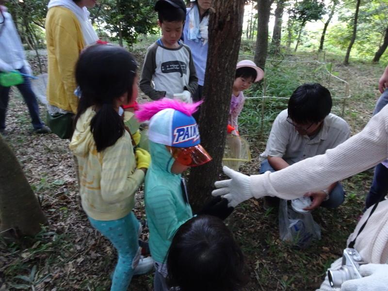 第2回「うみべの森でカブトムシを探そう!」_c0108460_00224255.jpg