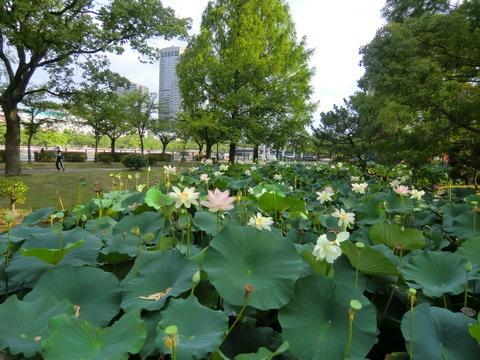 夏のイベント 大阪城 天神祭り_b0176192_10483421.jpg