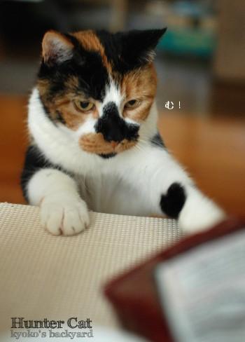 ドリトス、食べたい!_b0253205_02460660.jpg