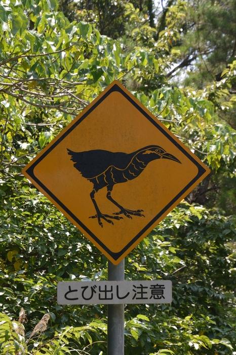 沖縄本島/2016.07.22~24_b0148352_2164289.jpg