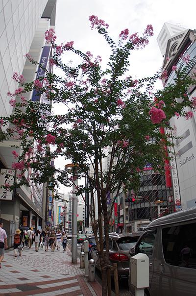 7月25日(月)今日の渋谷109前交差点_b0056983_14424862.jpg