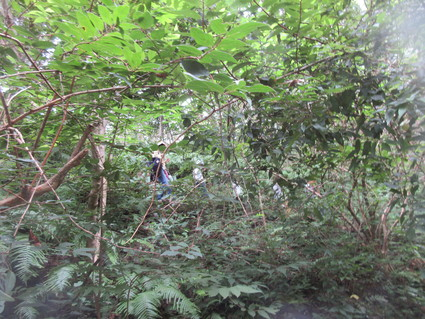 深日小・学童保育の子どもたち 孝子の森で遊ぶ  by  (ナベサダ)_f0053885_2055773.jpg