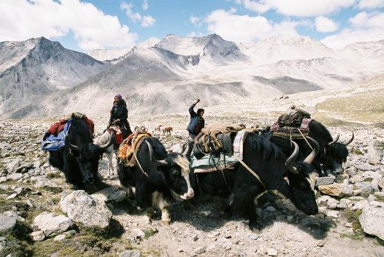 Himalko keti  Dolpo&Mustang Exp.2016_e0111396_2162649.jpg