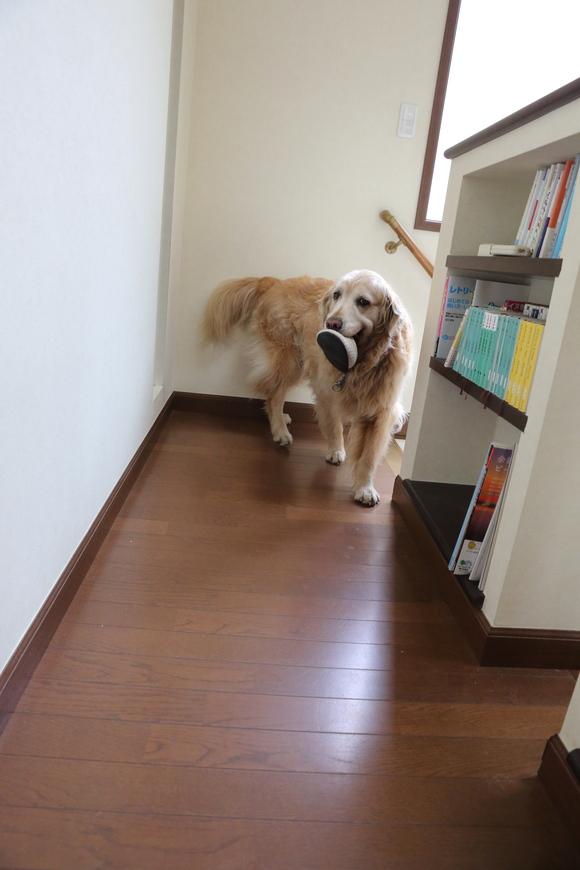 二階に来るということ。_b0275998_10183846.jpg