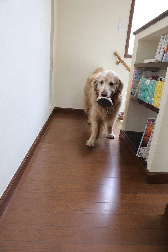 二階に来るということ。_b0275998_10192767.jpg