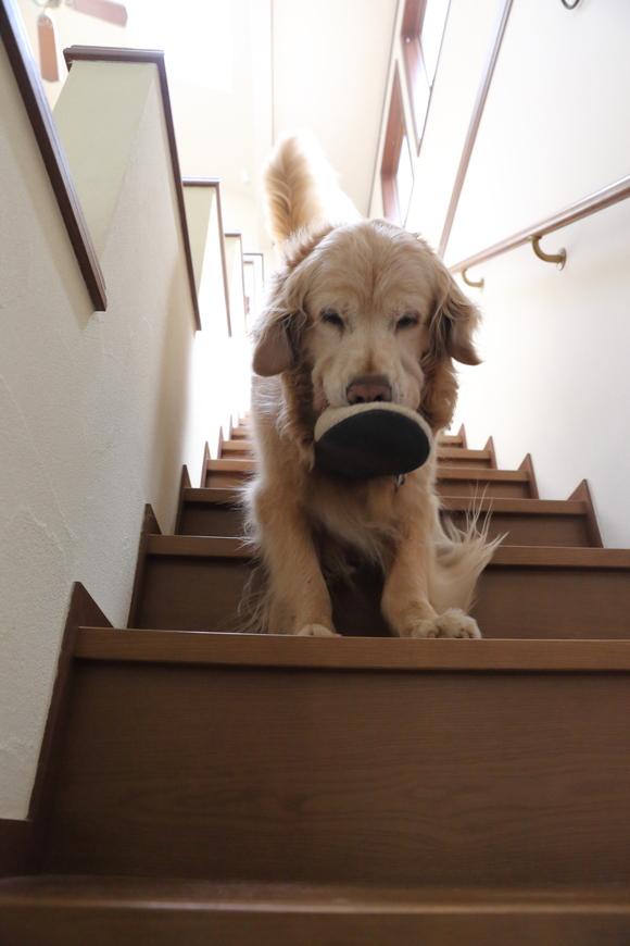 二階に来るということ。_b0275998_10244211.jpg