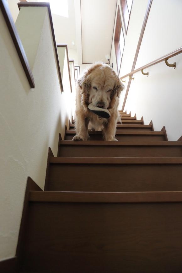 二階に来るということ。_b0275998_1024793.jpg