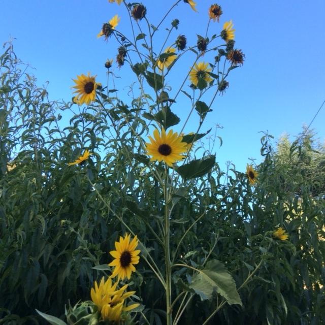 今日の庭からと散歩で_a0331910_12384508.jpg
