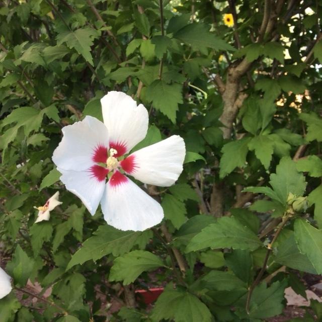 今日の庭からと散歩で_a0331910_12385512.jpg