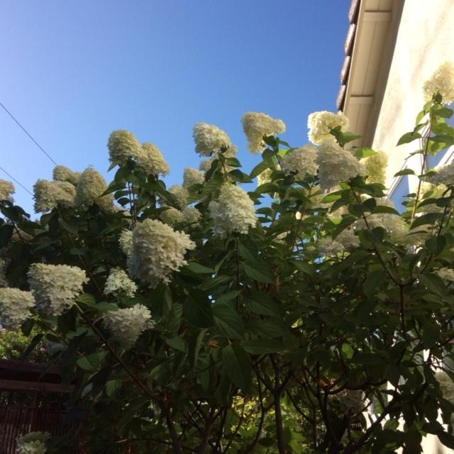 今日の庭からと散歩で_a0331910_12390079.jpg