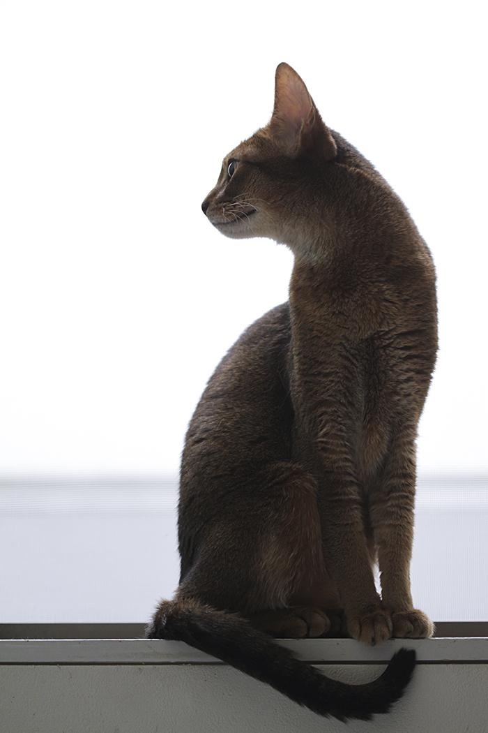 [猫的]ハイ、ポーズ、その1。_e0090124_2352197.jpg