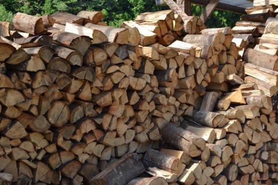 メルマガ:薪林業 (847号)_a0051539_8395474.jpg