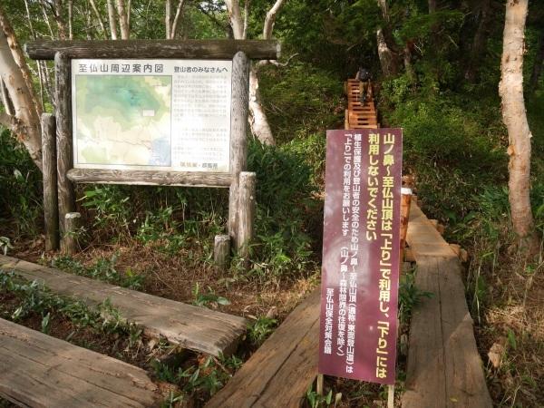 蛇紋岩と花の名山 至仏山_a0351368_22311581.jpg
