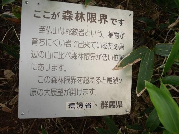 蛇紋岩と花の名山 至仏山_a0351368_22331066.jpg