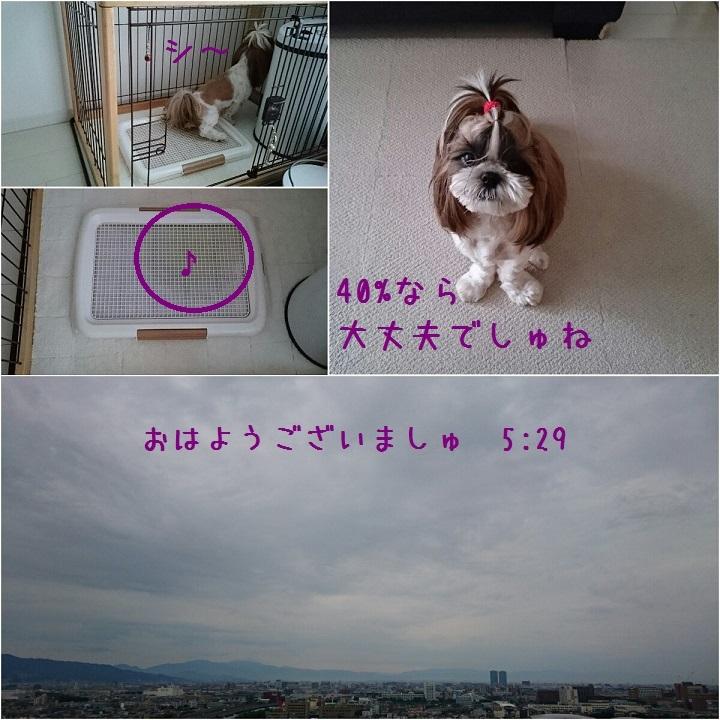 c0363378_14134838.jpg