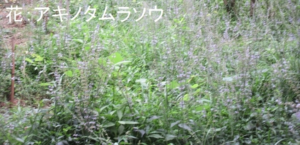 深日小・学童保育の子どもたち 孝子の森で遊ぶ  by  (ナベサダ)_f0053885_4363485.jpg