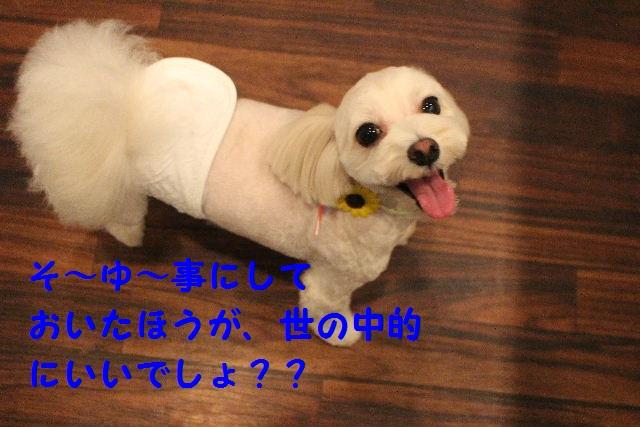 b0130018_23221117.jpg