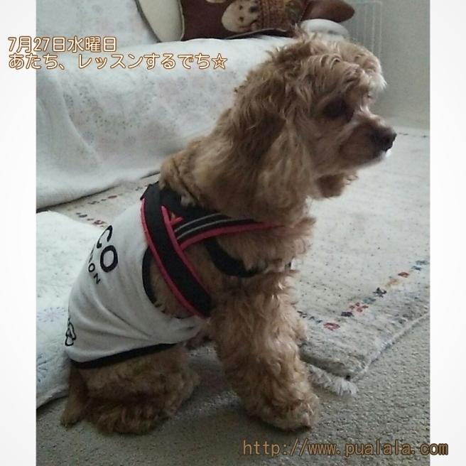 7月27日水曜日…犬との暮らし方教室_d0256356_05014462.jpg