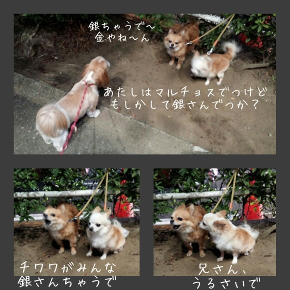 b0306158_20111485.jpg