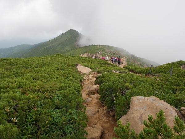 蛇紋岩と花の名山 至仏山_a0351368_22091653.jpg