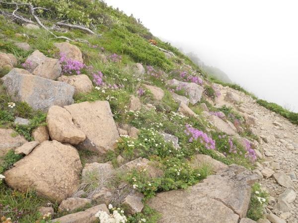 蛇紋岩と花の名山 至仏山_a0351368_22101190.jpg