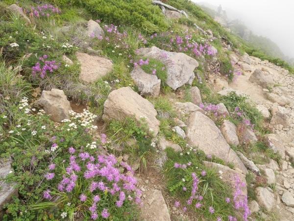 蛇紋岩と花の名山 至仏山_a0351368_22110264.jpg