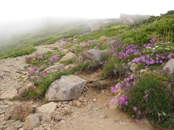 蛇紋岩と花の名山 至仏山_a0351368_22120478.jpg