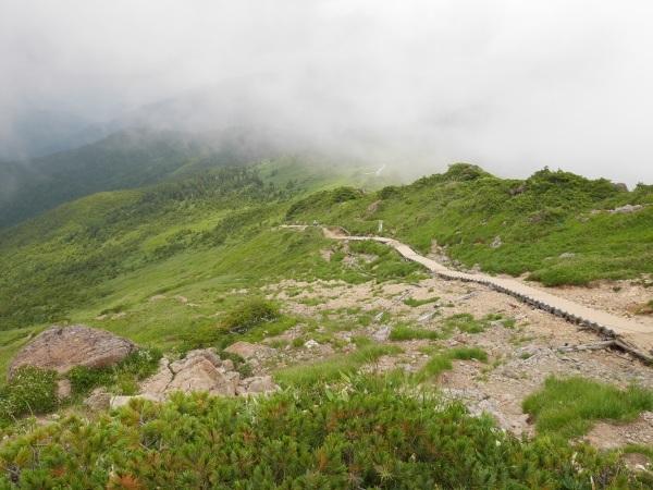 蛇紋岩と花の名山 至仏山_a0351368_22170493.jpg