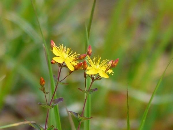 花の名山 至仏山の高山植物_a0351368_22590152.jpg