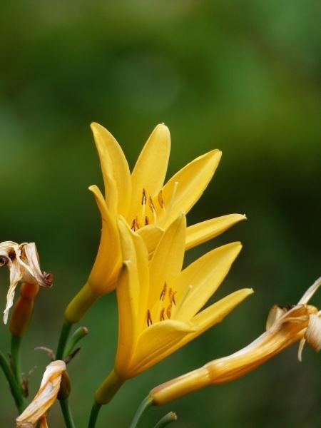 花の名山 至仏山の高山植物_a0351368_23023793.jpg