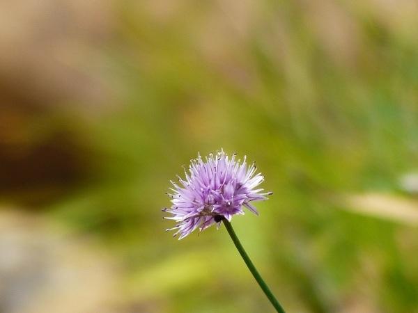 花の名山 至仏山の高山植物_a0351368_23034181.jpg