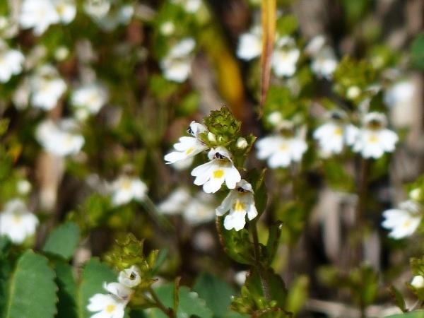 花の名山 至仏山の高山植物_a0351368_23053247.jpg