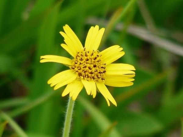 花の名山 至仏山の高山植物_a0351368_23223750.jpg
