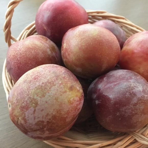 初夏のフルーツたっぷり焼き込みパイと、_b0065587_15365753.jpg