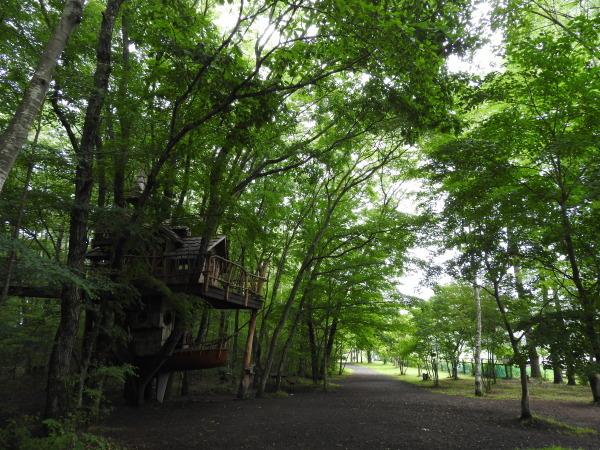 おしぎっぱの森あささんぽ_b0174425_17571996.jpg