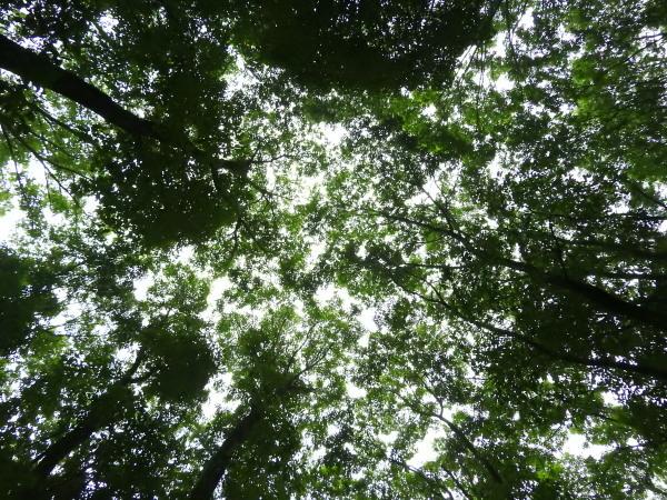 おしぎっぱの森あささんぽ_b0174425_18035441.jpg