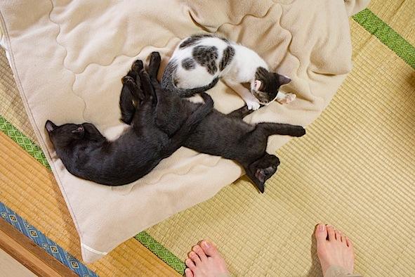 「あなたの暮らし」に「猫とのくらし」どうでしょう_d0073743_14584623.jpg