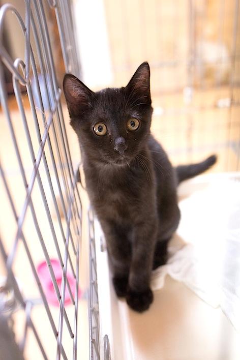 「あなたの暮らし」に「猫とのくらし」どうでしょう_d0073743_14593279.jpg