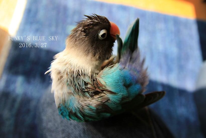 水浴びB.Bの記録 → (かわいいB.B動画×3・7月4日)_c0145250_11115828.jpg