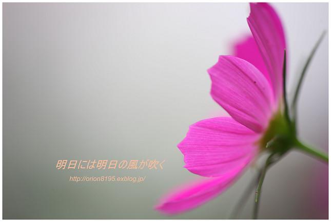 f0361079_2251729.jpg