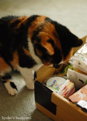 箱根から届いた噂のおもちゃ_b0253205_05372302.jpg