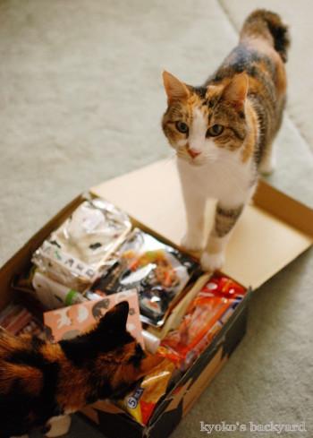 箱根から届いた噂のおもちゃ_b0253205_05375499.jpg