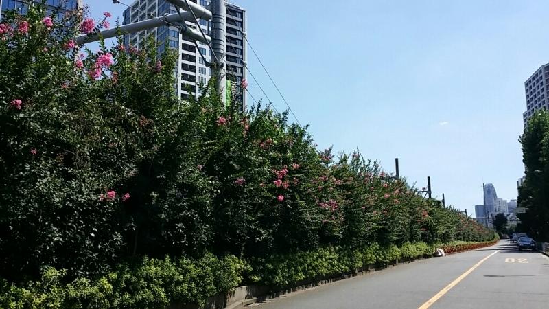 やっぱり暑い!東京は_b0019313_17202953.jpg